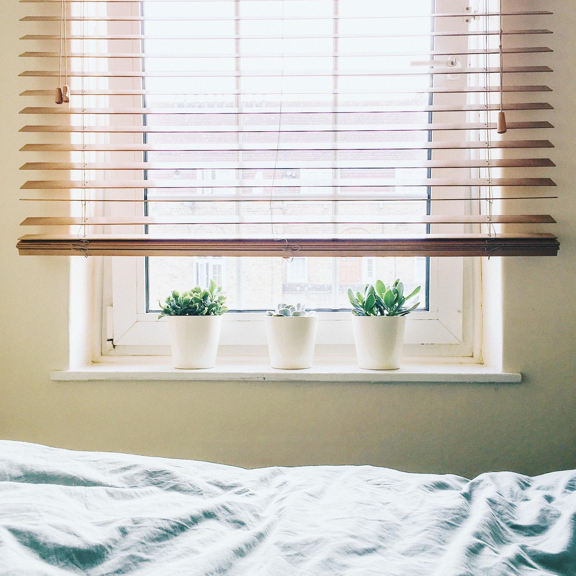 Home indoor plants on the window
